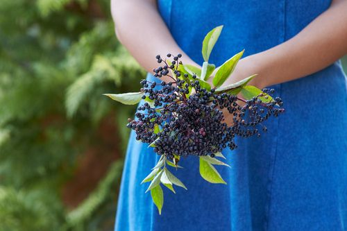 How to Grow Elderberries and make Elderberry Syrup - The Paleo Mama