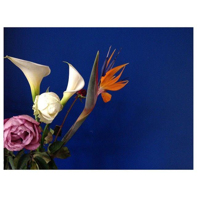 #flowers #flores #strelitzia #cala #rosa #rose #purple #white #orange #blue #wall #ornament