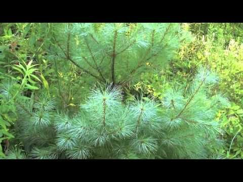 Non-Vascular and Vascular Plants