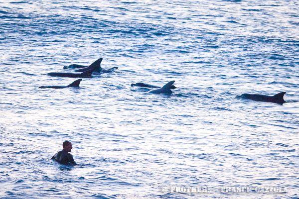 Dolphins at Bondi Beach this morning 7 Aug 2012
