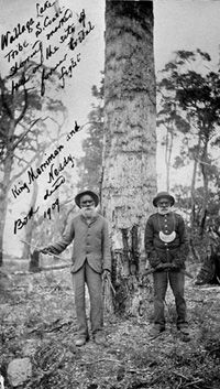 Photograph of King Merryman of Wallaga Lake standing with Neddy in front of a marked tree