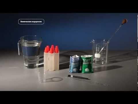 Химические водоросли или коллоидный сад - опыты - YouTube