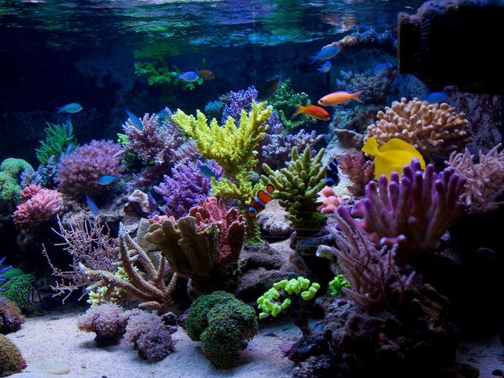 Here's a very nice aquarium by Dawid Szpańsk from Radzymin, Poland. http://www.zeovit.com/forums/showthread.php?t=17270
