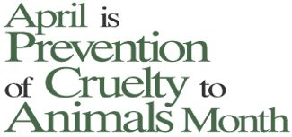 Proactive prevention in animal cruelty