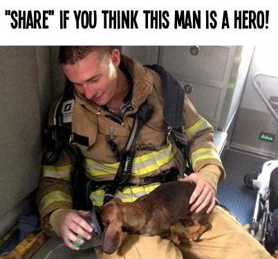 PIN if you think he's a hero!   All about #dogs #cats #pets