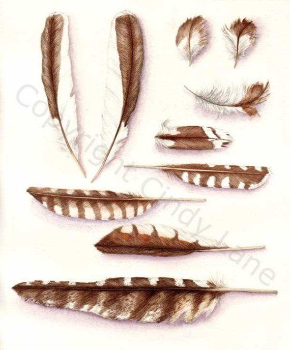 Kookaburra Feathers 8 x 10 by CindyLane on Etsy, $18.00