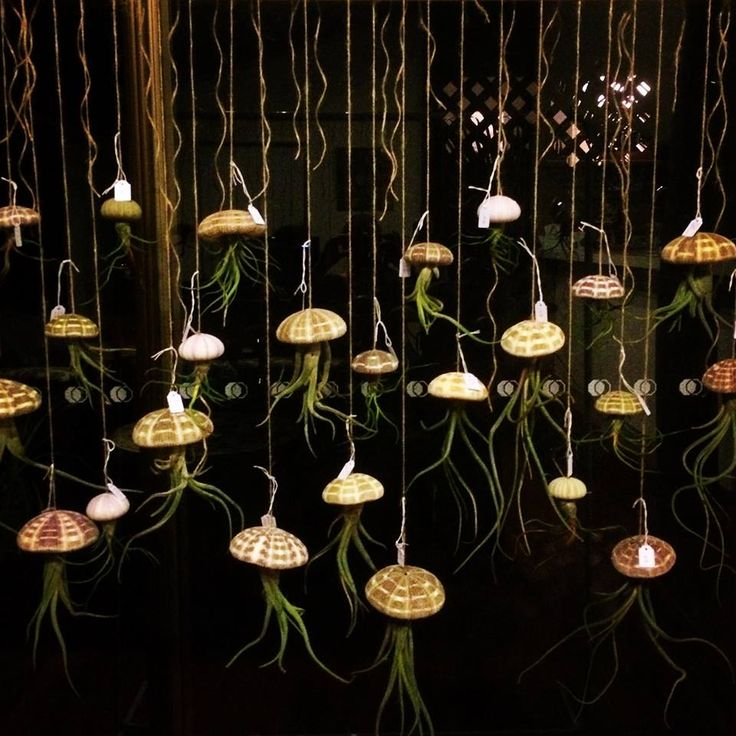 Sea of Jellies #airplants #tillandsia #airplantdesigns #shells #urchins #jellyfish #ethicallysourced #hanginggarden