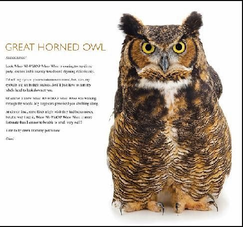Owl Fact Sheets For Kids Google Search Owls Owl