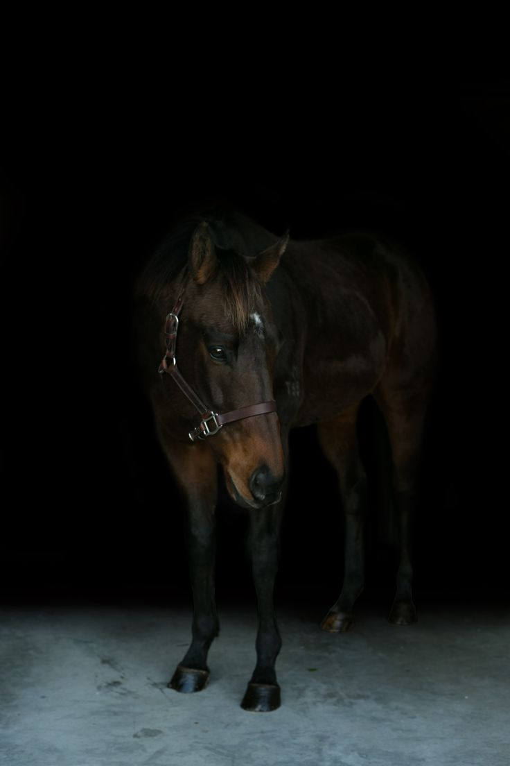 Thoroughbred Horse | Equine Portrait Photography | Bridie Rose photography