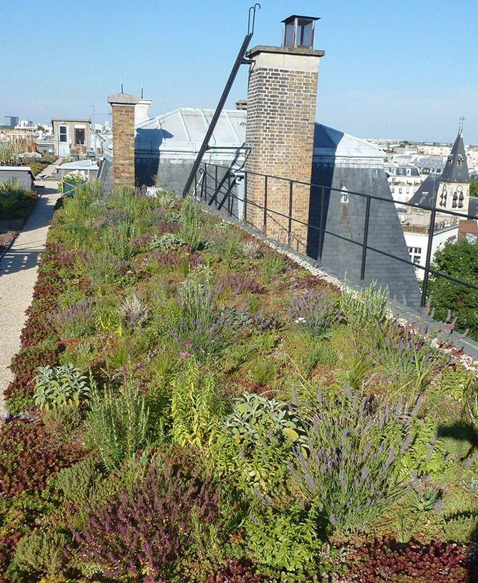 Végétalisations et biodiversité : une alliance possible entre la ville et la nature