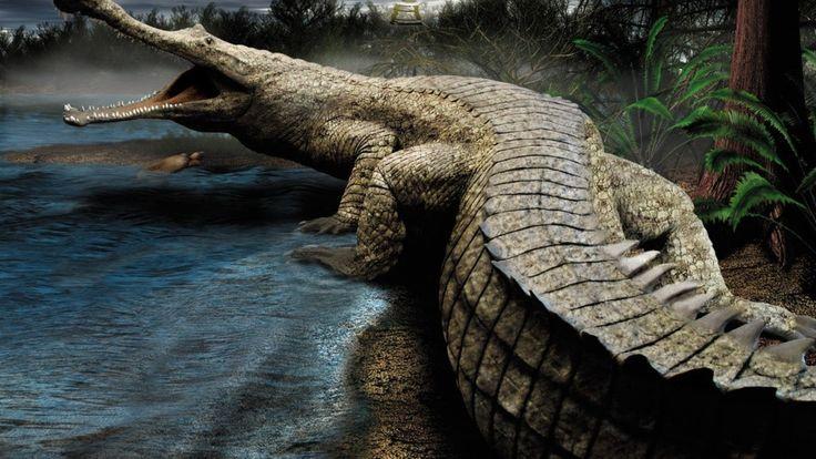 Саркозух. Африканская колыбель жизни подарила истории целый пласт невероятных форм. Среди них выделяются пресноводные крокодилы. Некоторые виды оных ничуть не уступали габаритами хищным двуногим соседям. Латинское название Sarcosuchus происходит от древнегреческих слов - мясной крокодил.