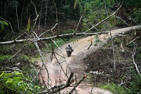 Off the beaten track at Bukit Bangkirai national park, East Kalimantan.....