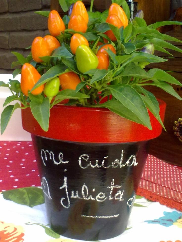 Tienda decocactus cactus crasas suculentas macetas de - Macetas de porcelana ...
