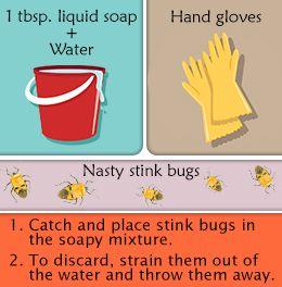 Homemade Stink Bug Trap