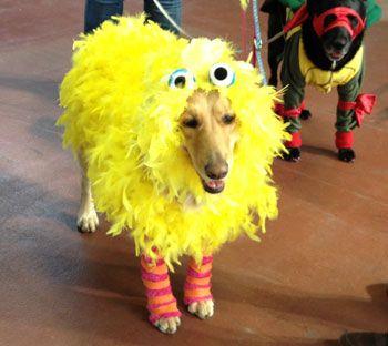 Dog dressed in Big Bird costume