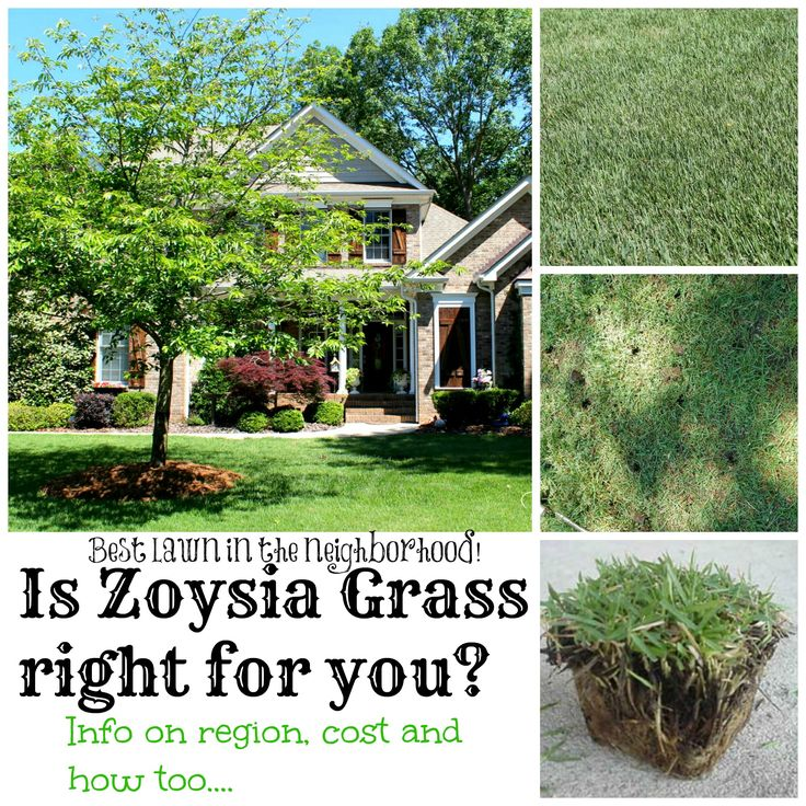 Zoysia - an awesome grass that needs little maintenance. @Brookmeade Sod Farm, Inc.