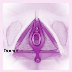 Damm und Dammmassage | www.netmoms.de | #netmoms