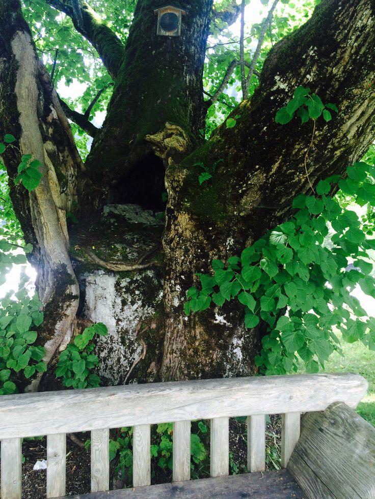 Naturdenkmal in #Dienten am #Hochkönig