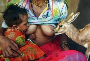 breast milk feeding to animals - Hledat Googlem