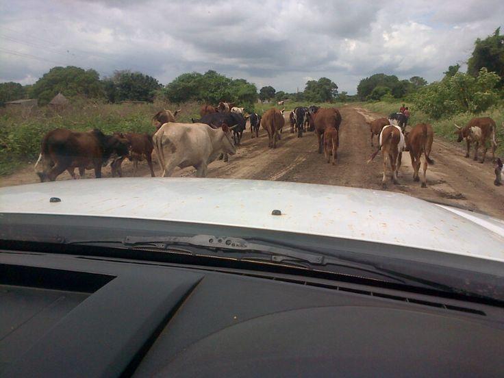 Life in Africa! www.lisaharriswrites.com