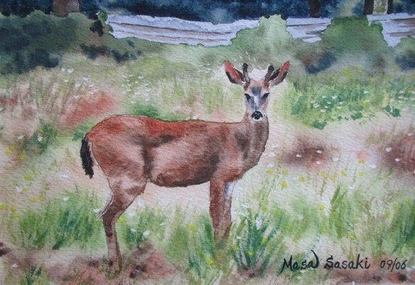 本作品は、バンクーバー島に旅行に行った際、野原で見かけた野生の鹿の様子を描いたものです。製作日数は約1週間。絵の大きさ:約16.5cmx11.5cm(6.5イ...|ハンドメイド、手作り、手仕事品の通販・販売・購入ならCreema。