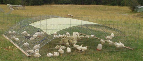 Portable chicken pen made from stock panels. This site has some excellent ideas about raising hens...lots of practical information.
