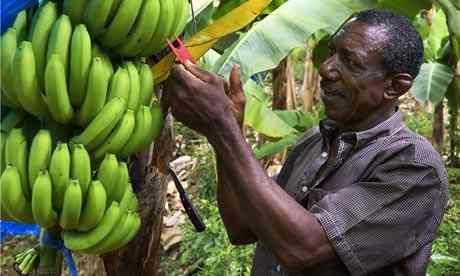 Oxfam's Go Bananas lessons give teaching ideas and fair trade inspiration.