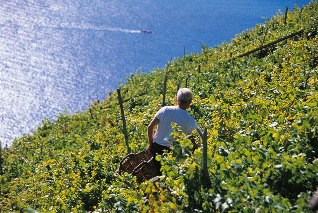 Ah! The terraced vineyards in Cinque Terre! Who would like to meet a local producer and sip a glass of wine with this view? Discover other things not to miss in Cinque Terre. Just click the pic.