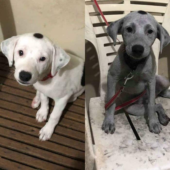 Dieser Sehr Susse Und Sehr Weisse Hund Der Mit Einer Tute Holzkohle Gespielt Hat 19 Hunde Die Ihre Besitzer Beinahe Um In 2020 Hunde Witzige Hundebilder Susse Tiere