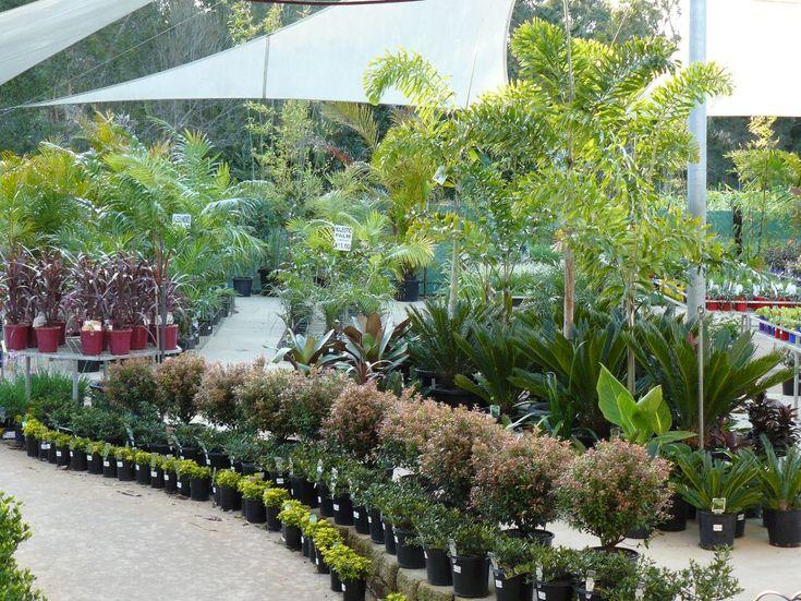 Rosemount Nursery and Garden Centre >Sunshine Coast Queensland Australia, Retail Plant Nursery and Garden Centre Sunshine Coast