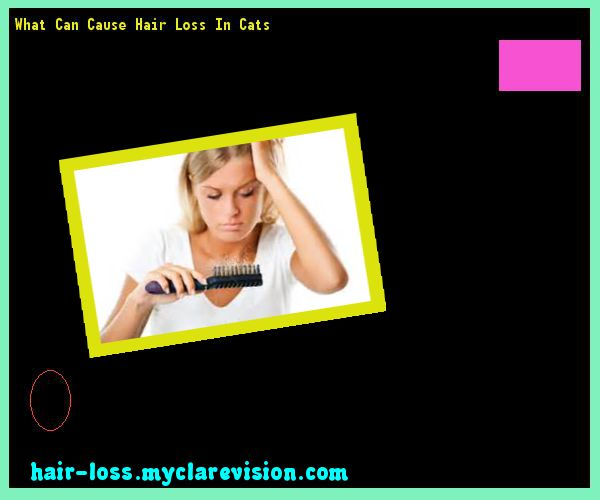 What Can Cause Hair Loss In Cats 084157 - Hair Loss Cure!