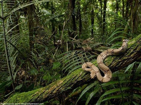 Discover snakes species in natural habitat Amazon Jungle