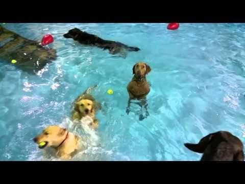 Las imágenes fueron captadas por la guardería canina Happy Tails Resort ubicada en Norfolk, Virginia.El video fue publicado en Facebook y ya cuenta con más de 14 millones de reproducciones. ¡No te lo pierdas! Texto: Dolores Molina (@doloresmmolina) - Fotos y videos:Facebook.com/Happytailscamp