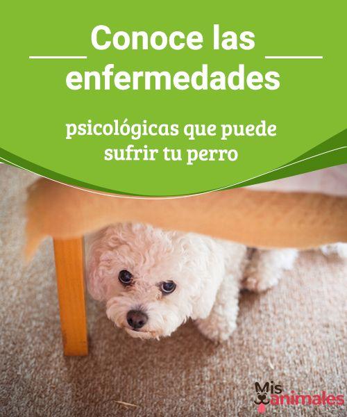 Conoce las enfermedades psicológicas que puede sufrir tu perro Uno de los mayores problemas que puede sufrir un canino son las enfermedades psicológicas, ya que estas se caracterizan por ser muy difíciles de tratar. #enfermedades #salud #perro #psicológicas