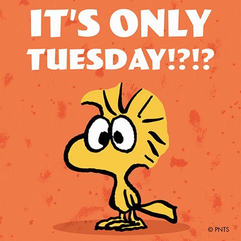 happy tuesday snoopy memes - photo #13