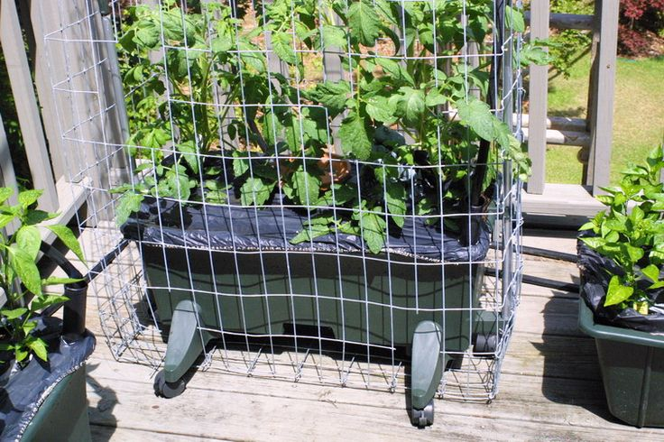 The Indestructible Earthbox Tomato Cage! | Gardening | Pinterest | Tomato  Cage, Container Gardening And Gardens