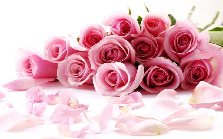 Rose-Flower-Wallpaper