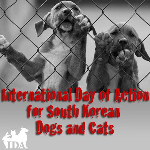 Tuesday, August 16th, is the International Day of Action for South Korean Dogs and Cats, when activists around the world speak out against the suffering and terrible fate of the two million dogs and cats killed every year in South Korea for consumption. Mostly homeless dogs are strangled, beaten to death, or literally ripped apart. Others …