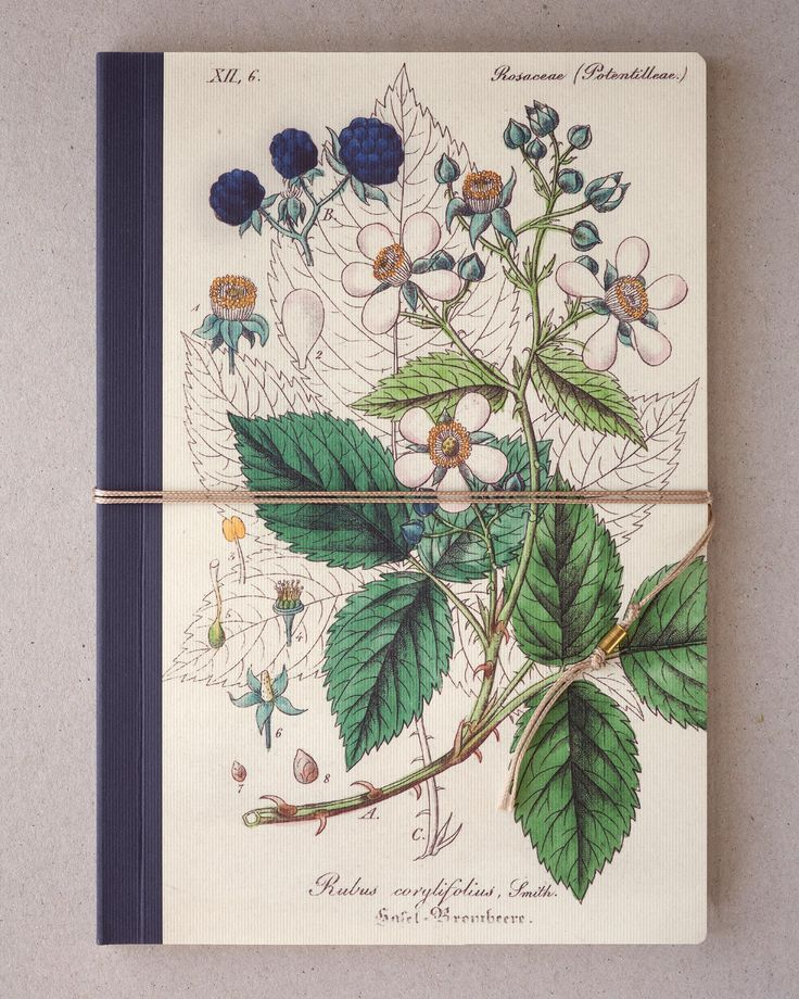 Notebook, Sketchbook - Blackberry, Bramble, Thimbleberry  10€/one https://www.etsy.com/listing/524562064/notebook-sketchbook-blackberry-bramble?ref=shop_home_active_11