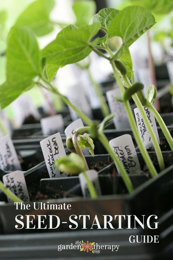 The ultimate seed-starting guide from Garden Therapy #seedstarting #gardentherapy #gardening #growingfromseed