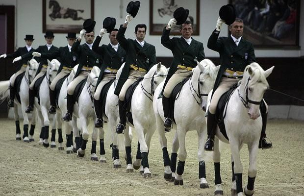 Trained Lipizzaners from the Spanish Riding School in Vienna! :)