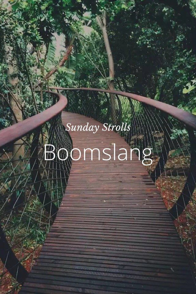 The Lion & The Lady on Steller // The Boomslang