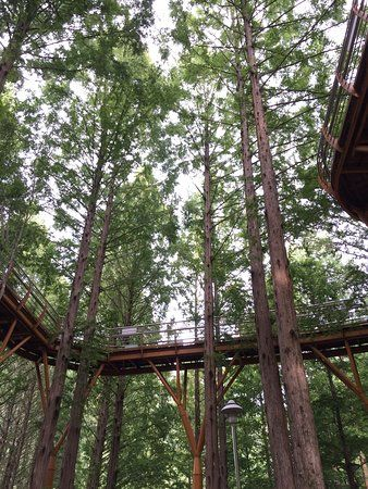 Jangtaesan Natural Forest, Daejeon: See 6 reviews, articles, and 8 photos of Jangtaesan Natural Forest, ranked No.19 on TripAdvisor among 110 attractions in Daejeon.