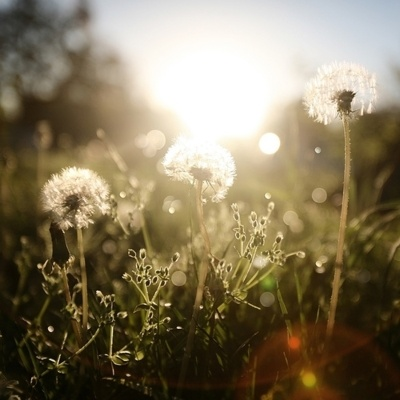 .Lights, Dreams, Nature, Beautiful, Dandelions, Sun, Flower, Photography, Fields