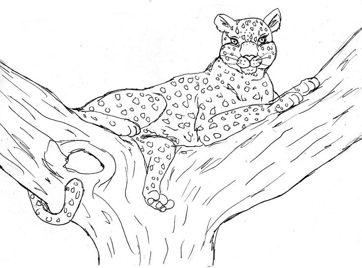 10 best coloring pages images on Pinterest  Coloring pages Free