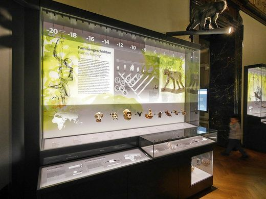 PLEXIGLAS® in Museums. Museum of Natural History in Vienna