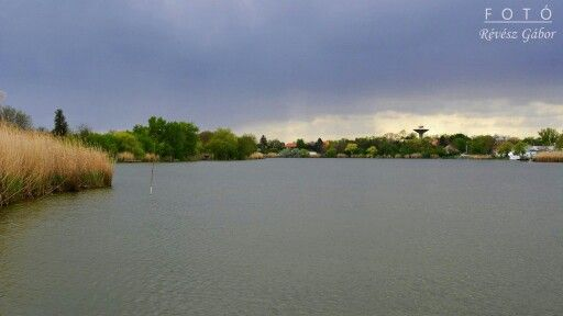 Holt-Tisza