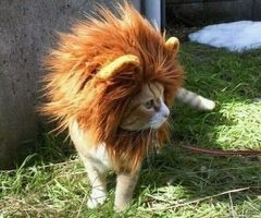 Perfect for our hairless cat @Patrick Koelling