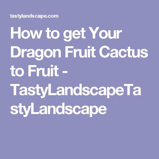 How to get Your Dragon Fruit Cactus to Fruit - TastyLandscapeTastyLandscape