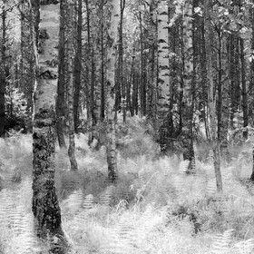 Birchforest by ellu